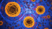 Promotional image: cell with yellow nuclei on a blue background. Some cells are small in the background and some are up close in the foreground.