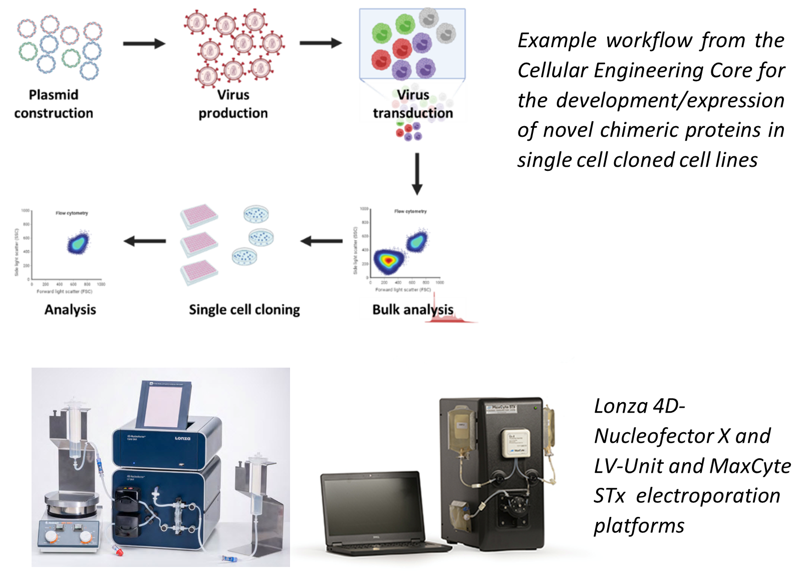 Advanced cell engineering Workflow